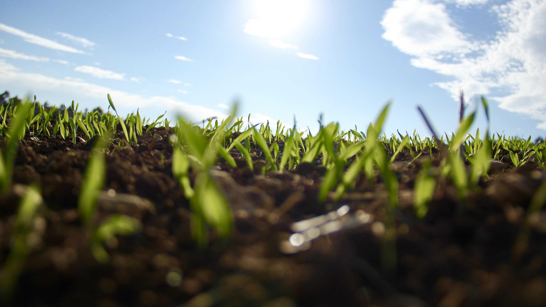"""proNat – """"Projekt für nachhaltige Pflanzenzüchtung"""""""