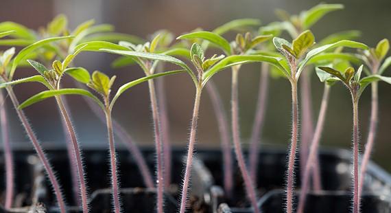 ProSpecieRara zur Erhaltung der Nutzpflanzen-Vielfalt – sehen Sie den Film dazu!